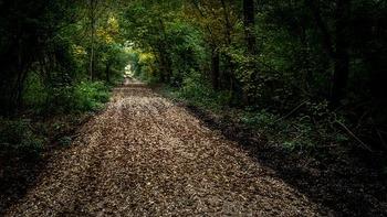 https://pixabay.com/ja/photos/雰囲気-光-自然-森-ツリー-977532/