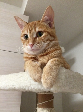 https://pixabay.com/ja/photos/猫-ねこ-ネコ-動物-生物-2405691/